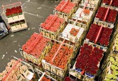 Il mercato dei fiori di Aalsmeer