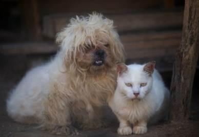 GUINNESS DEI PRIMATI/ L'impresa di un 17enne: onoranze funebri per gli animali