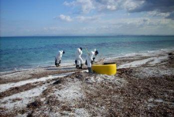 Spiaggie colpite dall'olio combustibile vicino a Porto Torres, foto Ansa