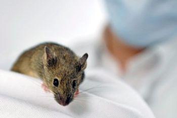 I topi hanno 1120 geni olfattivi