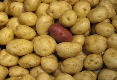 patatassassinaR375_05mar10.jpg