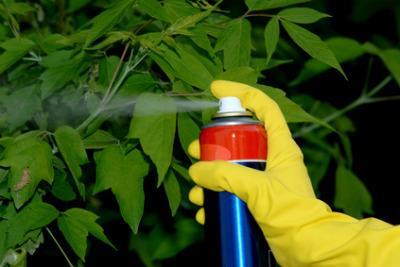 AMBIENTE/ Arrivano i microbi buoni: proteggono frutta e verdura dagli insetti nocivi