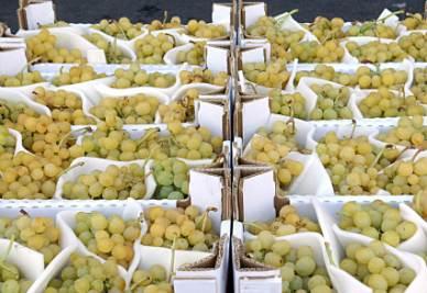 """MENU' DI CAPODANNO/ Tostada de Brandada de Bacalao e il """"rito"""" dei 12 acini d'uva: idee dalla Spagna per il cenone di fine anno"""