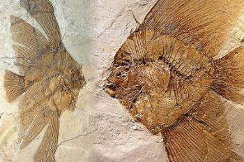 fossili_R400.jpg