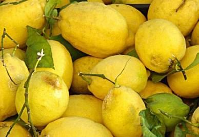 LETTURE/ Solo i limoni di Montale e Tolkien possono guarirci dalla Facebook-mania