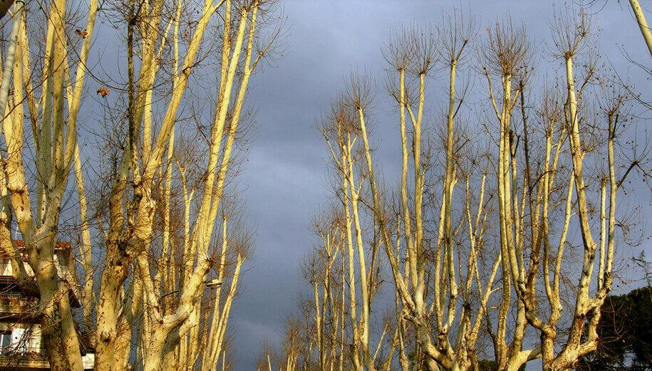 AMBIENTE/ Dov'è finito «l'albero a cui tendevi...»? Un appello al Comune