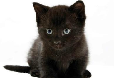 Un gatto nero, l'utimo beniamino del Camp Nou (INFOPHOTO)