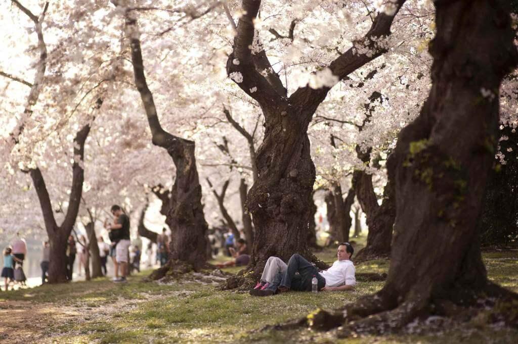 Un parco con alcuni alberi in fiore