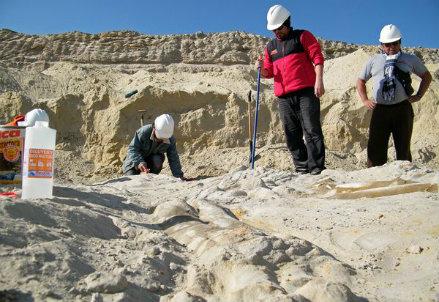I fossili di balene