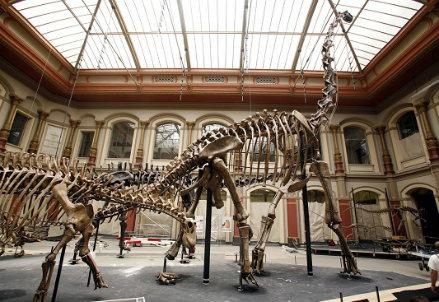 Dinosauro (infophoto)