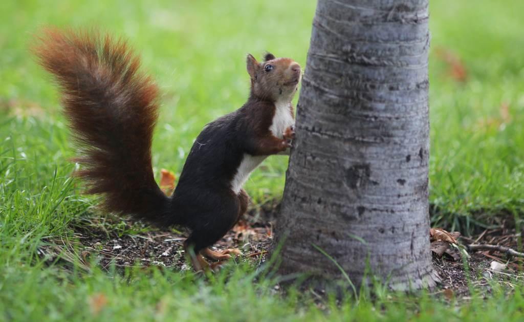scoiattolo (infophoto)