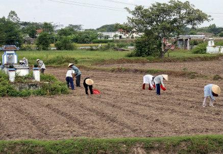 Farmers in Vietnam   (Infophoto)