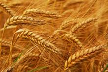Emergenza cibo, la speculazione affama il mondo