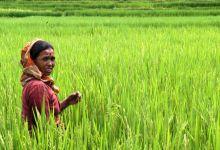Piatti (Avsi): il ruolo delle Ong per risolvere l'emergenza cibo