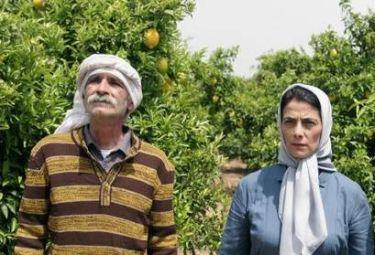 Film da rivedere 6 altre sorprese come un matrimonio for Ospite inglese