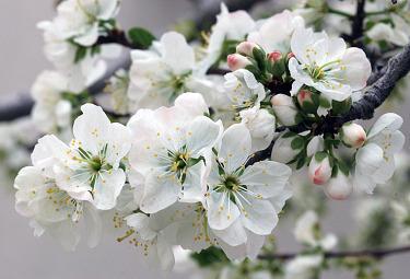 fiori_bianchiR375.jpg
