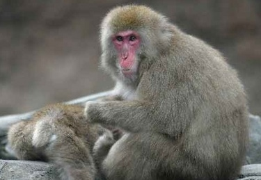 scimmiaR375_5set08.jpg