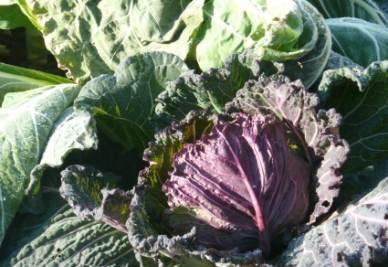 Una tipica verdura di febbraio