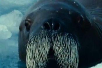 Vacanze degne di una foca