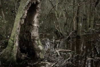 I cadaveri erano nascosti in un albero cavo