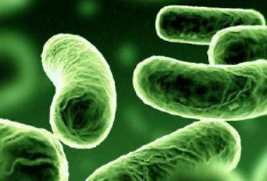 Alcuni batteri