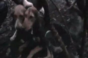 Il segugio Stella (a destra) salvata dal beagle Carrettoni (a sinistra)