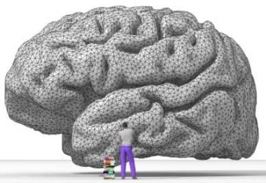 Resa del cervello umano di Nicolas P. Rougier