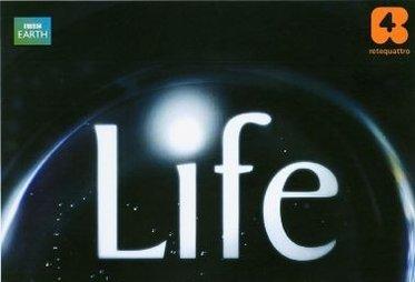 life_R375.jpg