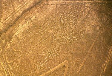 Il ragno, una delle misteriose figure di Nazca