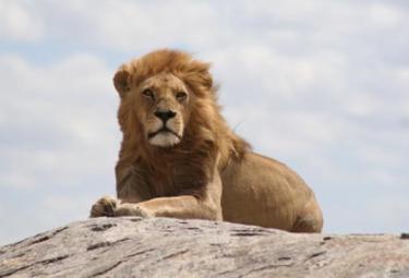 serengeti-r375.jpg