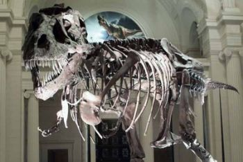 Lo scheletro di un tirannosauro