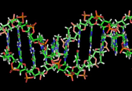 Depiction of the DNA double helix