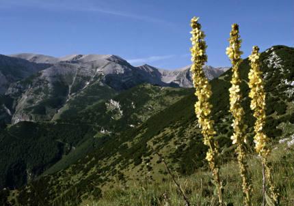 Ecosistema d'alta quota nel sito LTER Majella-Matese