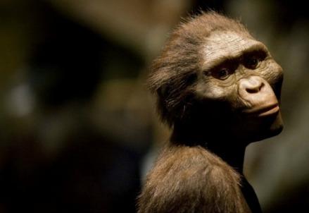 Lucy, fossile australopiteco (foto da Twitter)