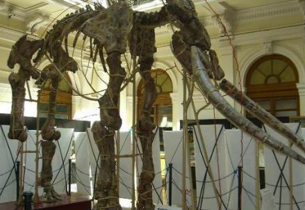 Uno scheletro di mammut