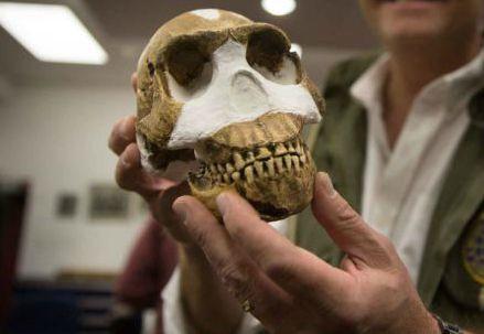 Il cranio di Naledi (Immagine dal web)