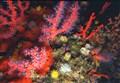 SCIENZAinATTO/ Trasformazioni ambientali in diretta: biodiversità e cambiamenti climatici nel Mediterraneo
