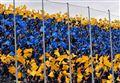 Diretta/ Frosinone Empoli streaming video e tv: precedenti e orario, quote e probabili formazioni