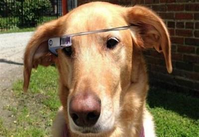 Google Glass FIDO