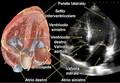 SCIENZ@SCUOLA/ Elementi di innovazione didattica nello studio del «cuore» al Liceo Scientifico. Un approccio storico, anatomico, fisiologico (2)