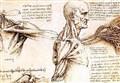 SCIENZ@SCUOLA/ Dossier Corpo Umano: Fare Scienza alla Scuola Primaria
