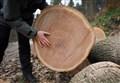 FEDERLEGNO AL MEETING/ Orsini: ecco perché il legno è davvero il materiale del futuro