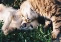 ANIMALI DROGATI/ Dai gatti alle renne agli elefanti: ecco chi si stronca di sostanze (e quali sono)