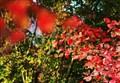 Autunno dopo autunno