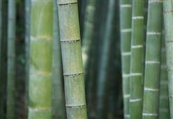 SFOOTING/ Un Paese di bambuccioni: così il bambù risolverà il problema della disoccupazione ...