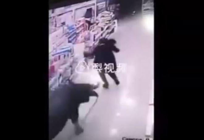 Bufalo aggredisce donna incinta (da video)