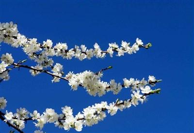 Oggi è l'Equinozio di Primavera