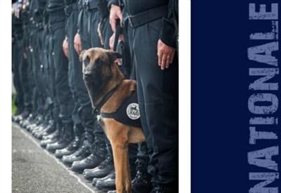 Diesel, la foto del cane ucciso dai terroristi (Twitter: Police Nationale)