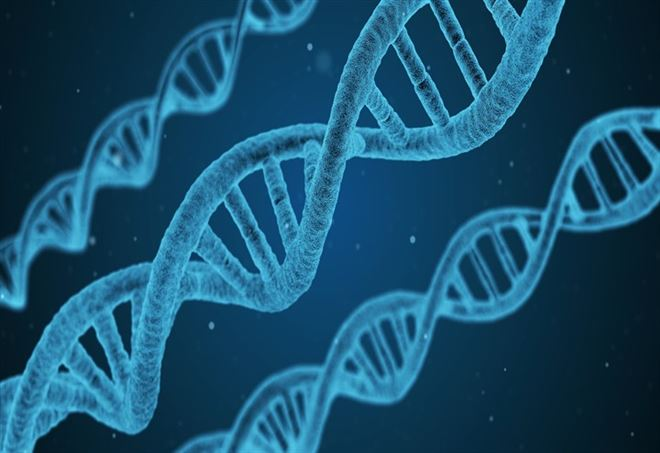 Modificato dna embrioni umani (Foto: da Pixabay)