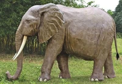 Elefante in libertà
